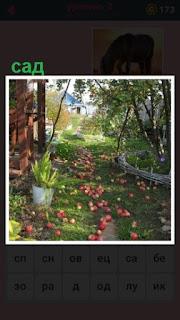 небольшой сад, в котором яблоки падают на землю