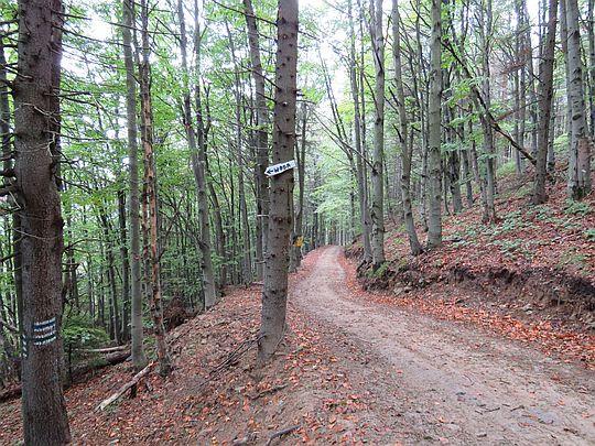 Szlak schodzi z leśnej drogi do źródła.