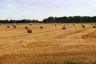 Δελτίο Τύπου:Έκδοση απόφασης Περιφερειάρχη ΠΚΜ σχετικά με την Ένταξη πράξεων στο Υπομέτρο 6.1 «Εγκατάσταση Νέων Γεωργών» του Προγράμματος Αγροτικής Ανάπτυξης (ΠΑΑ) 2014 – 2020»