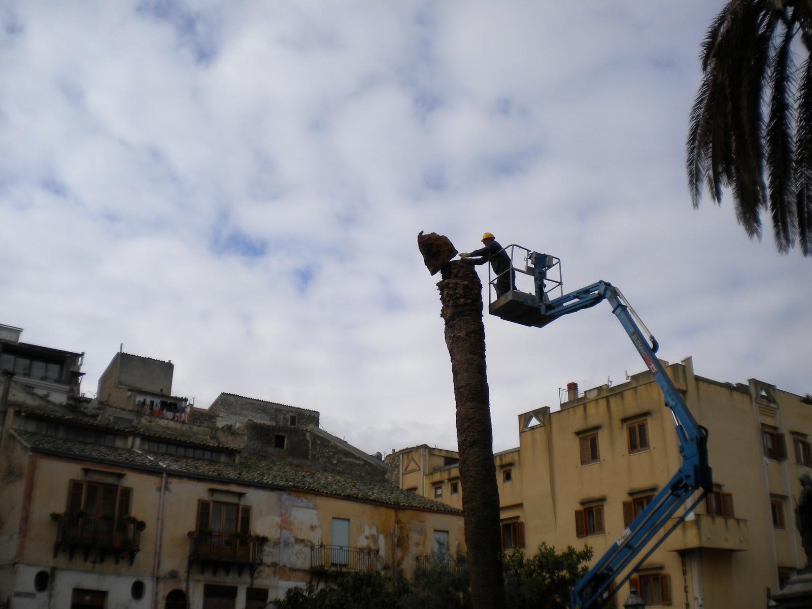 Questo ennesimo anniversario di San Ciro inizia (709 anno del martirio) con  una pessima scenografia. Lo squartamento delle palme che gli facevano da  corona ... 782008be11c