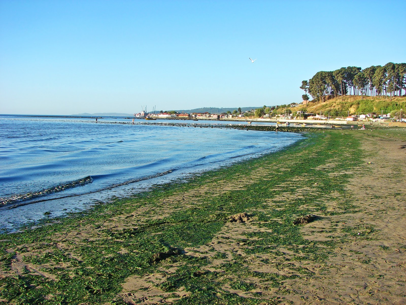 Volcanes, Rios,Ciudades y Pueblos de Chile: Playas Sur