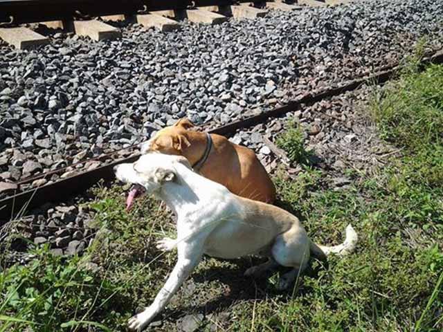 Un perro cuida de su compañera lesionada y la alimenta hasta que recibe ayuda