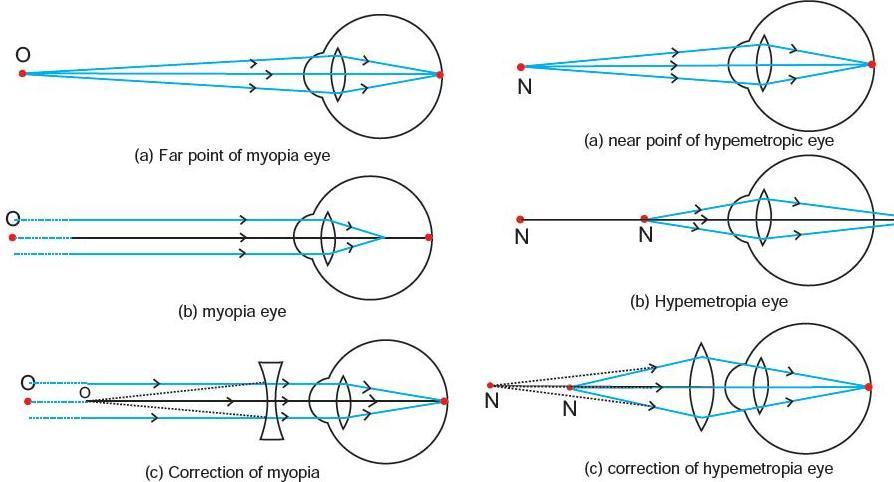 Cbse Physics Cbse Class 10 Physics The Humane Eyes Notes