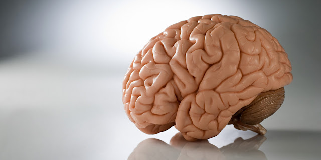 replika otak