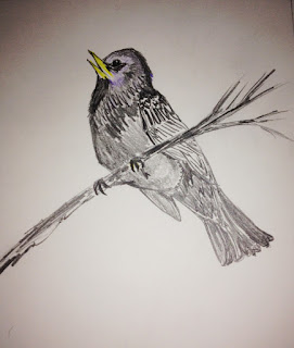 bird drawing by keagiles