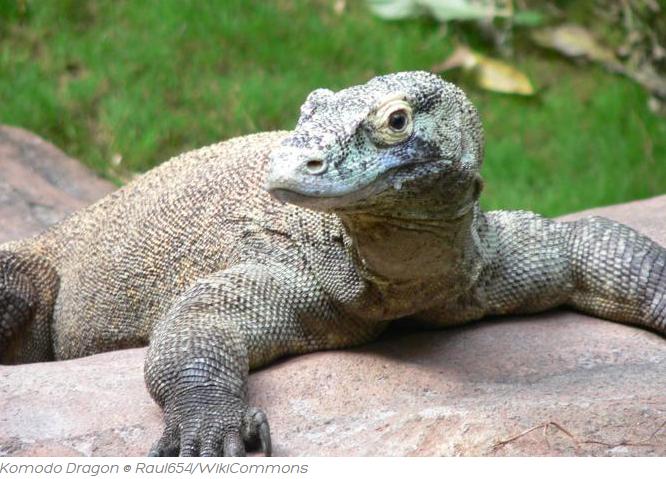 Pulai Komodo Keindahan alam Indonesia