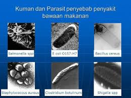 Mikoorganisme Patogen Penyebab Penyakit Pada Makanan Bahayanya Mikoorganisme Patogen pada Makanan dan Sumber Pencemarannya