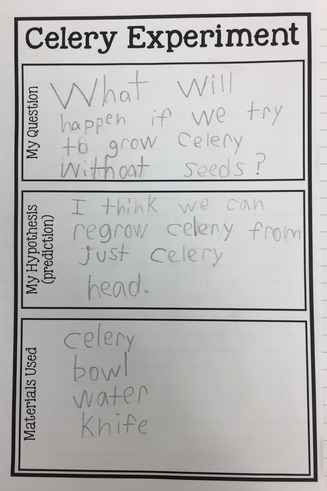 image about Celery Experiment Printable Worksheet titled Kearsons Clroom: The Wonderful Celery Experiment