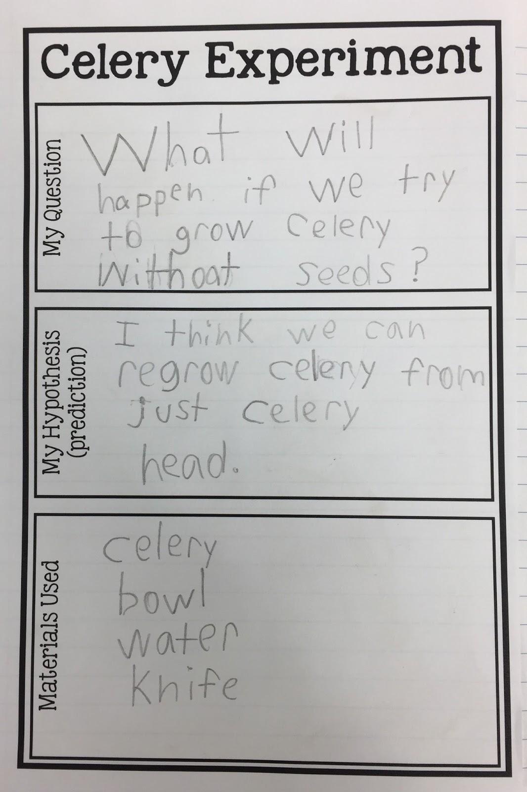 Kearson S Classroom The Great Celery Experiment