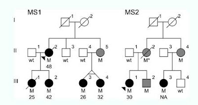 Simplified Pedigree for Families Presenting the NR1H3 p.Arg415Gln Mutation