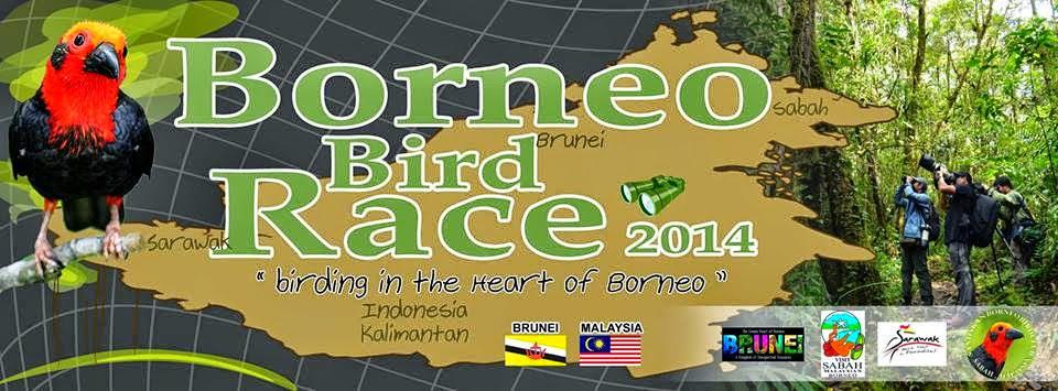 Bird Race Borneo