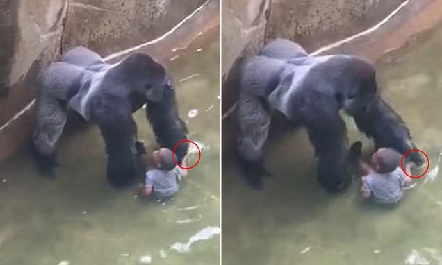 Harambe Kid S Mither