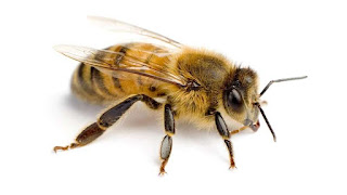 bees dream meaning