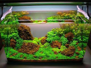 penyebab-tanaman-aquascape-mati.jpg