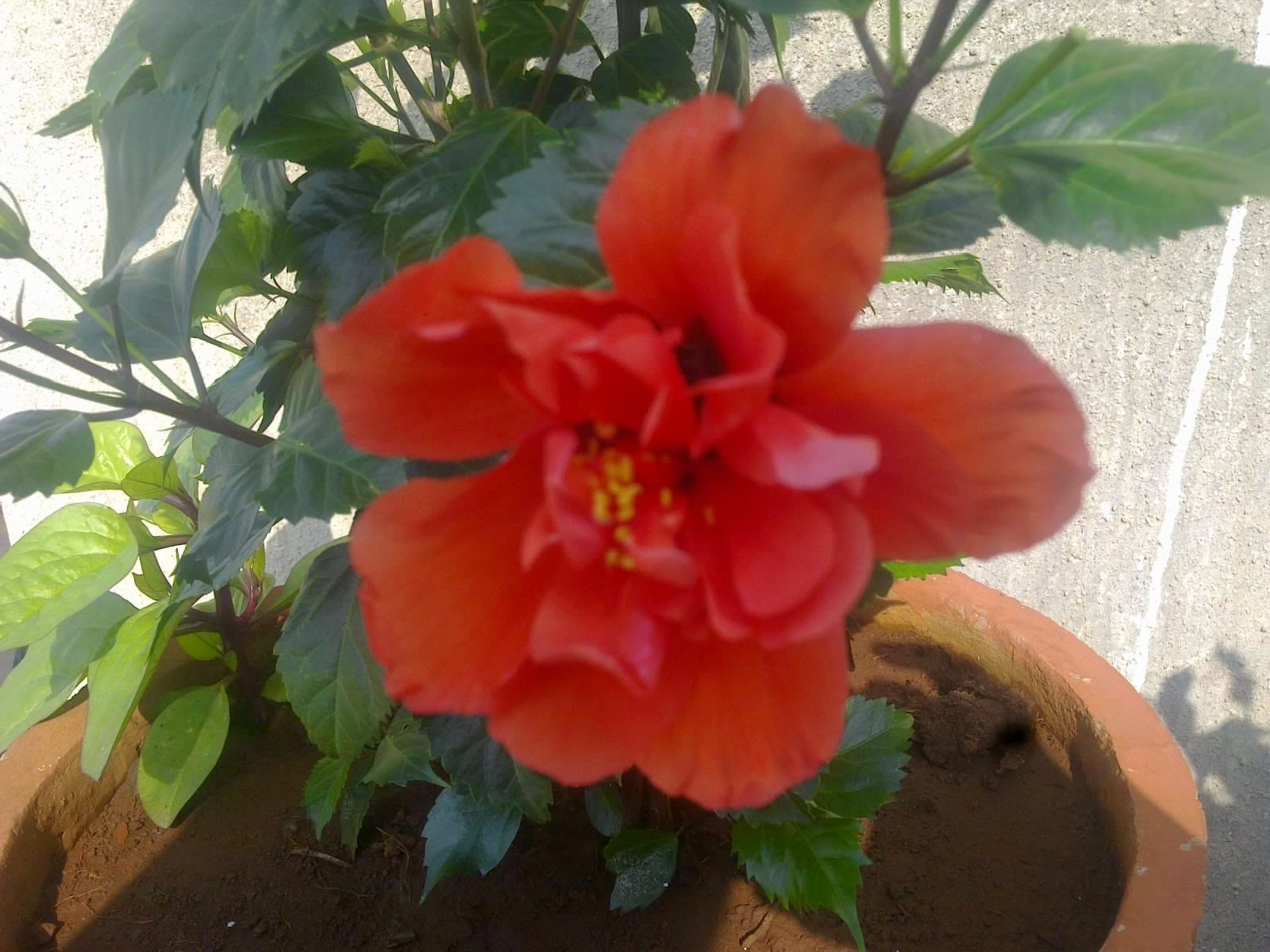 Small Water Garden Needs No Electricity Just Place Pots: Plants Growing In My Potted Garden.: How To Grow And Take