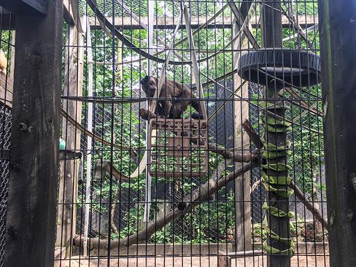 Capuchin Moneys at Ochsner Park Zoo in Baraboo WI