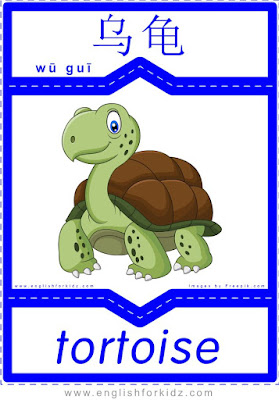 Tortoise - English-Chinese flashcards to learn names of wild animals