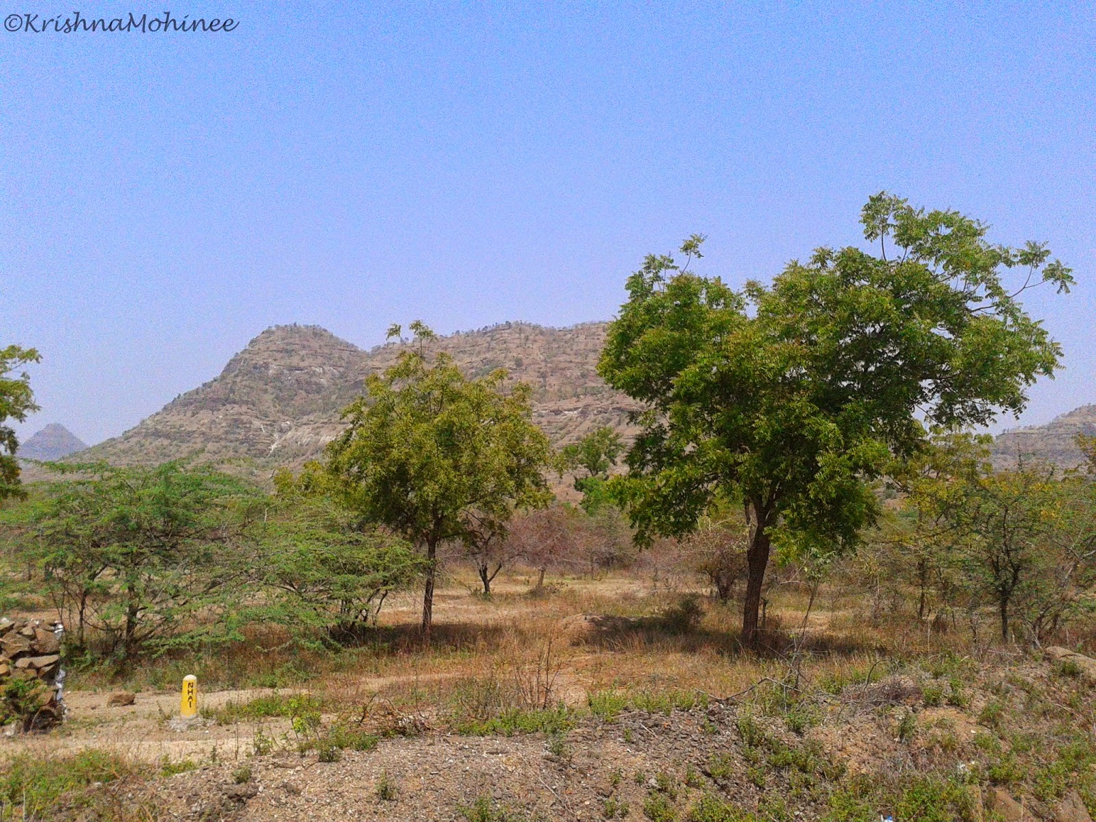 Image: Neem trees near highway