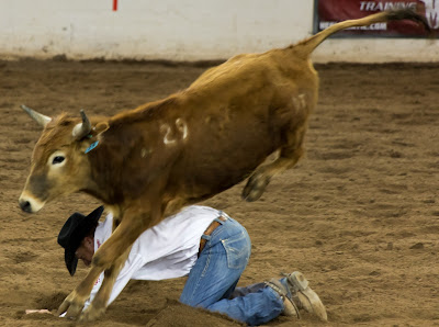 bull leaps over cowboy at the parada del sol rodeo in scottsdale, arizona