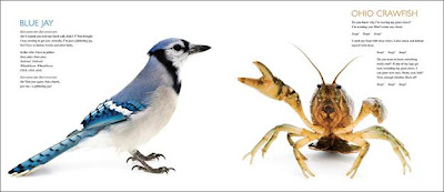blue jay and crawfish page