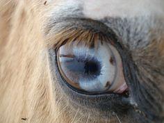 cavallo occhio diverso