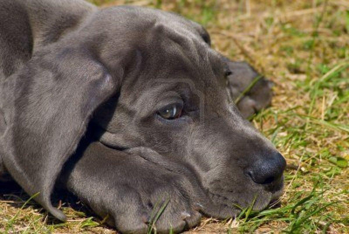 Top Ten Cutest Puppies Of All Time - impremedia.net
