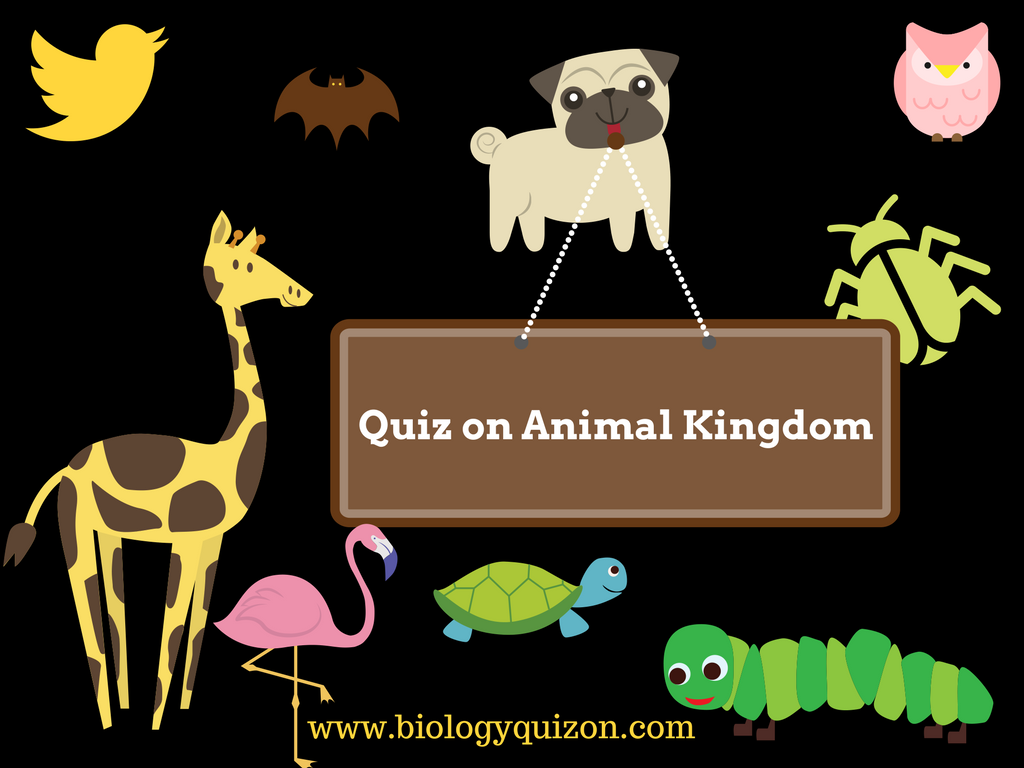 Animal Kingdom Quiz