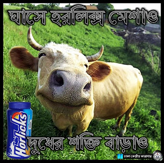 Bangladeshi Jokes