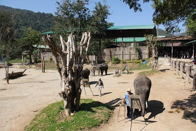 Thailand | Maetaeng Elephant Park - tunggang gajah lagi !