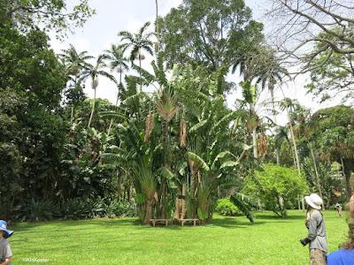 lawn, Foster Botanical Garden