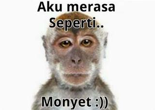 kata lucu monyet 2