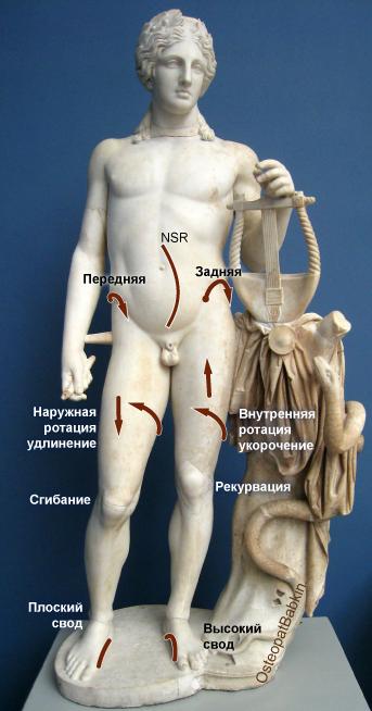 Нормальная адаптация крестца, таза и ног.