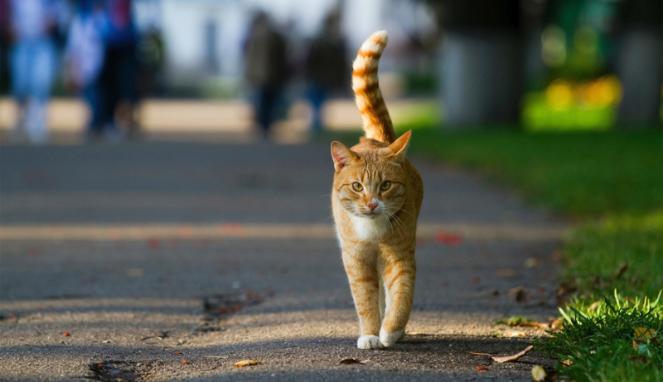 Pencinta Kucing Lah Sangat!