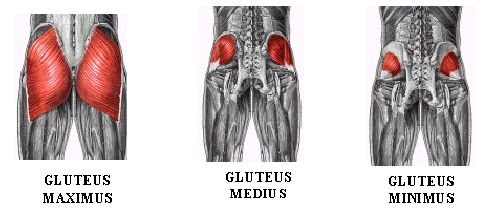 Your Glutes: Movers and Stabilizers for optmal performance