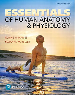 Essentials of Human Anatomy and Physiology 12 edition