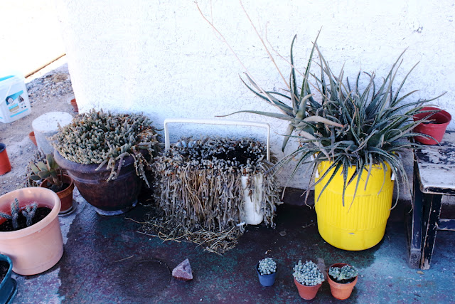 Photo of an assortment of cactus on my front porch.