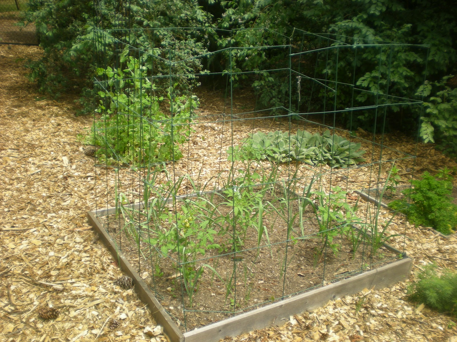 Tips for keeping animals out of your vegetable garden - How to keep animals out of your garden ...