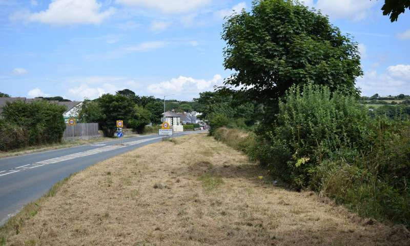 Berma da estrada sem vegetação