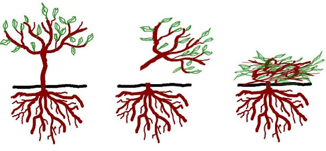Resultado de imagen para abono verde
