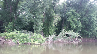potomac smallmouth trees