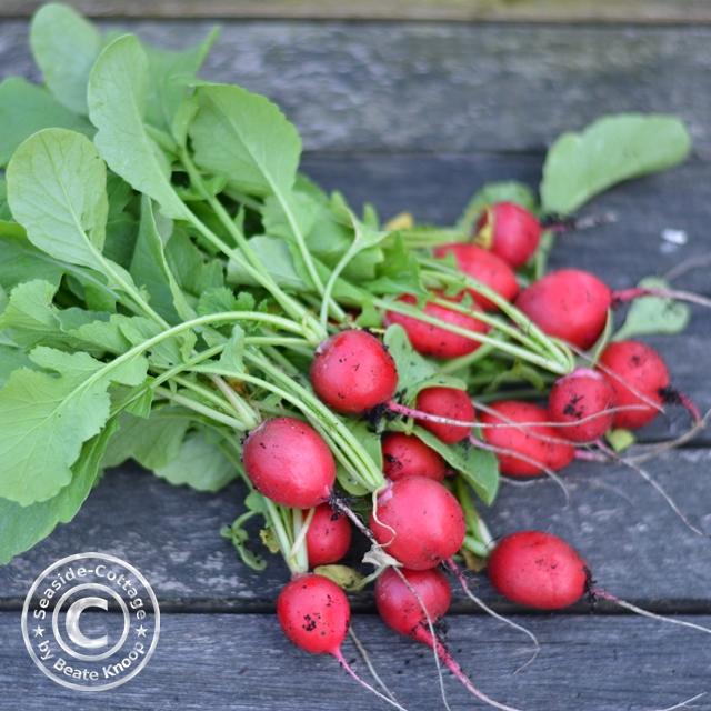 urban gardening, Rezept für Radieschenpesto und Nudelpfanne mit karamellisierten Radieschen