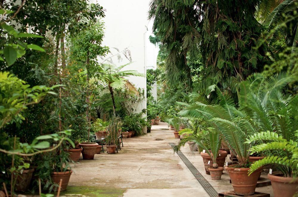 Vue générale d'une serre du jardin des simples de Florence