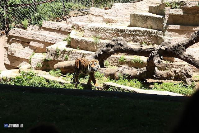 Zoo Barcelona : Paradisul verde dintre betoanele Barcelonei