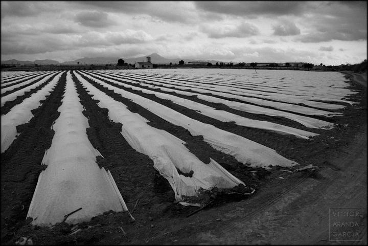 fotografía, Fuente Álamo, invernaderos, cultivos, paisaje, agricultura