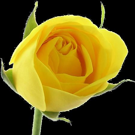 Gifs Im 193 Genes De Flores Variadas
