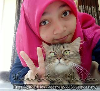 Kucing Parsi gebu