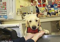 cães de trabalho