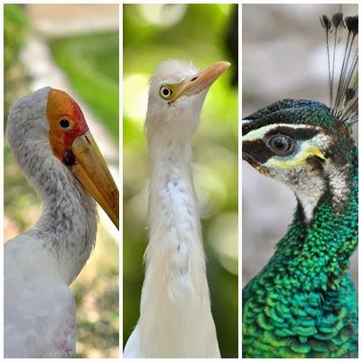 Taman Burung Kuala Lumpur | KL Bird Park