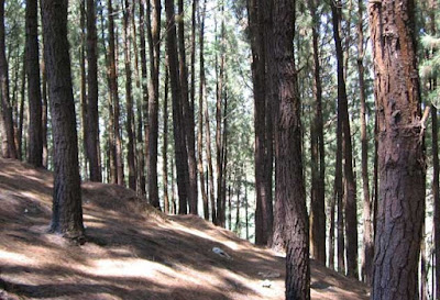 Pine Forest, Vagamon