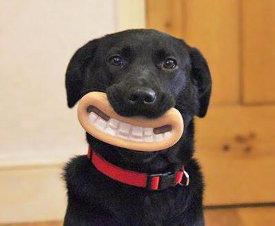 perro negro grande enseñando sus dientes
